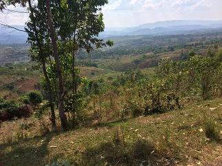 Utsikt över dalgång med träd